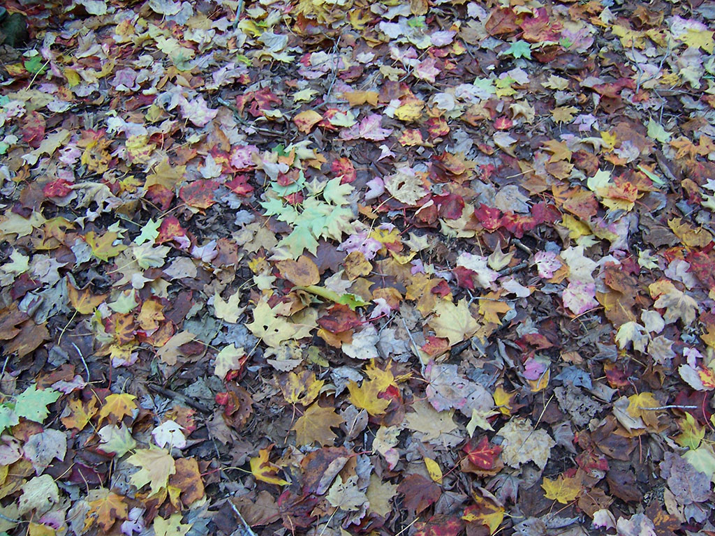 fall leaves 1 powerpoint